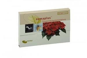 Pflanzen gegen Mücken Nemaplus